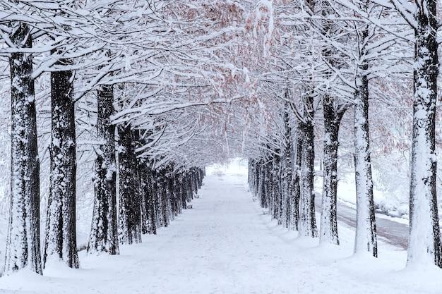 Wiersz drzew zimą z padającym śniegiem
