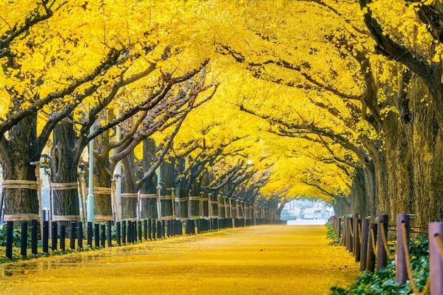 Wiersz żółtego miłorzębu jesienią. jesienny park w tokio, japonia.