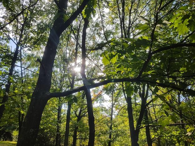 Wierzchołki drzew w letnim lesie. pojęcie środowiska