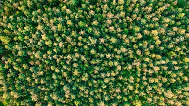 Wierzchołki widoku z góry drzewa, na tle, letnie tło