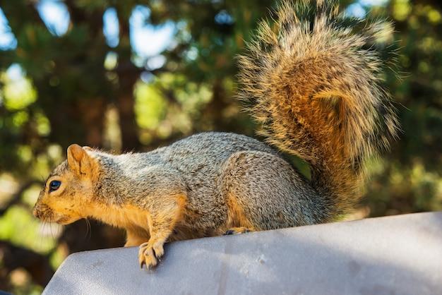 Wiewiórka dla dorosłych