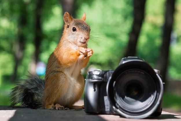 Wiewiórka i aparat fotograficzny