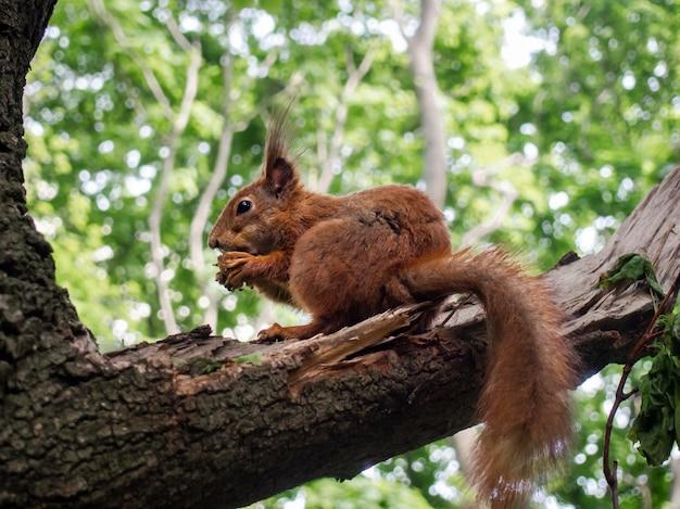 Wiewiórka na gałąź, zakończenie.