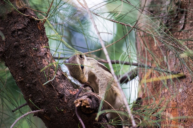 Wiewiórka na pniu drzewa w swoim naturalnym środowisku