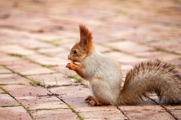 Wiewiórka na zewnątrz