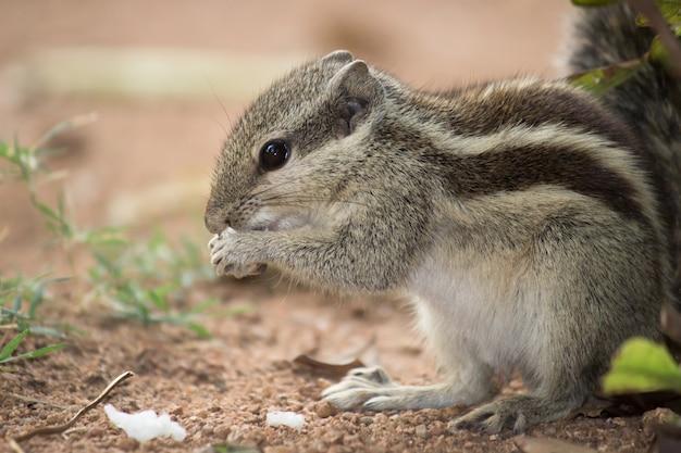 Wiewiórka na ziemi jedząca swój posiłek