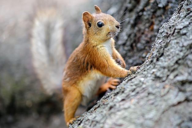 Wiewiórka siedzi w domku na drzewie.