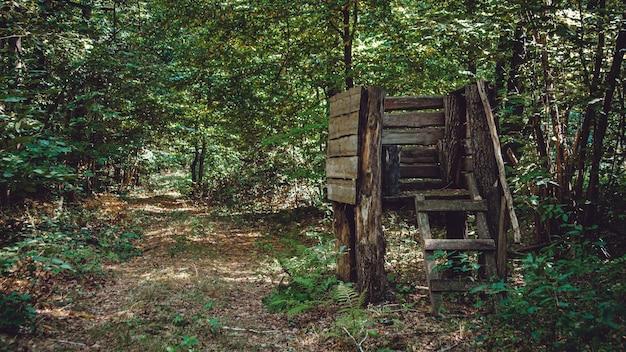 Wieża myśliwska do polowania na zwierzęta w zarośniętym lesie.