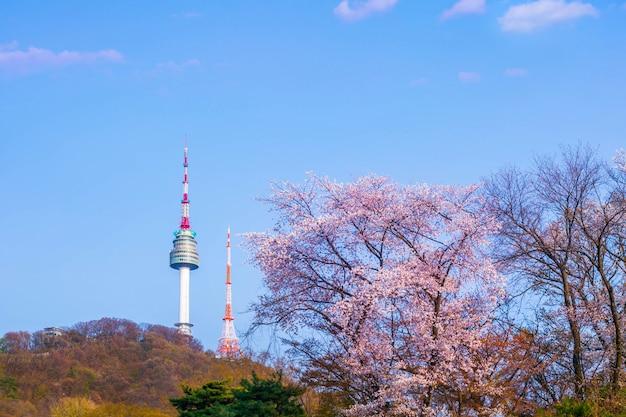 Wieża seulu na wiosnę z drzewa kwitnącej wiśni w pełnym rozkwicie, korea południowa.
