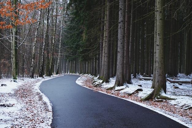 Wijąca się droga przez las w zimowy dzień
