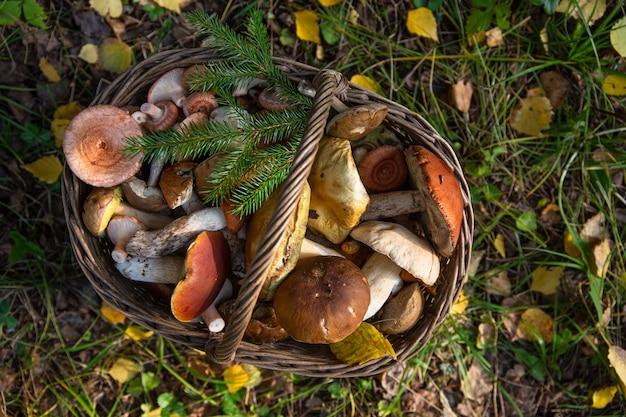 Wiklinowy kosz wypełniony grzybami leśnymi na tle jesiennych liści