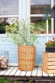 Wiklinowy kosz z kwiatami obok narzędzi ogrodniczych przy ścianie domu letni wystrój werandy dom