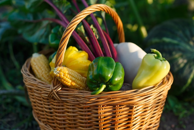 Wiklinowy kosz ze świeżymi warzywami. zbiory z ogrodu.