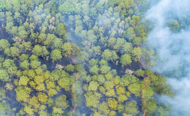 Wildfire pali drzewa i suchą trawę w lesie z dużym dymem z pożarów lasów