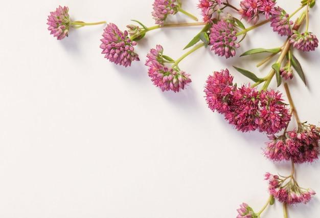 Wildflowers na białego papieru tle