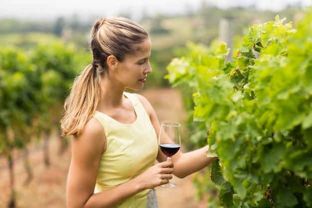 Winiarz gospodarstwa kieliszek do wina i sprawdzanie upraw winogron