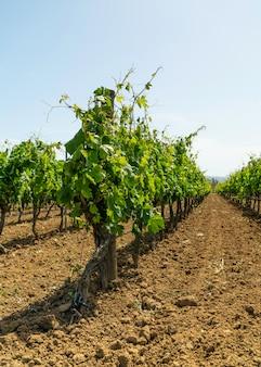 Winnica gotowa do produkcji wina