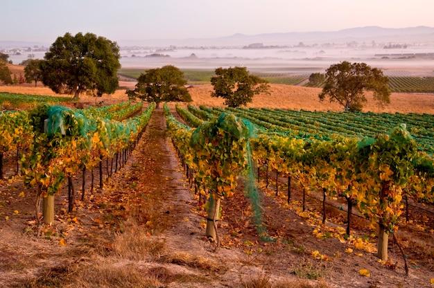 Winnica winogron jesienią