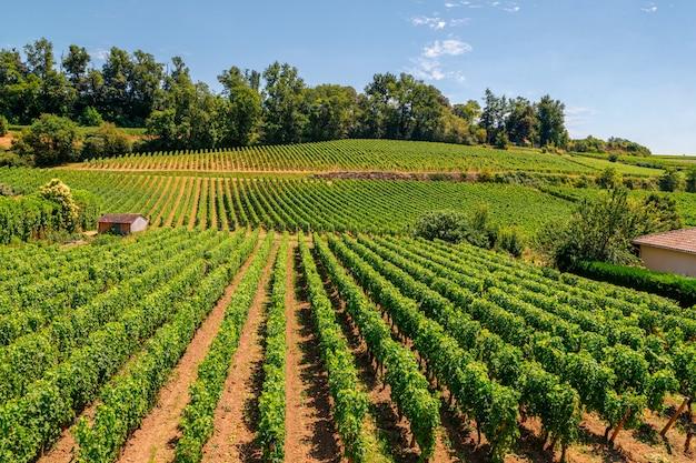 Winnice regionu saint emilion bordeaux akwitania we francji w słoneczny dzień