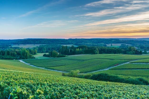 Winnice szampana o zachodzie słońca, montagne de reims, francja
