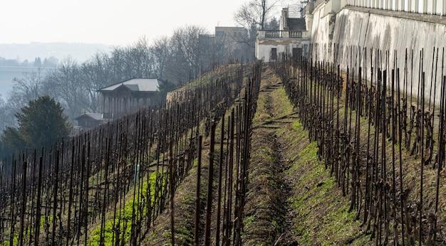 Winnice w europejskim mieście
