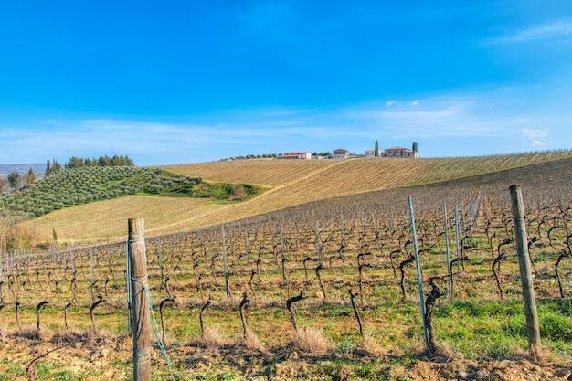 Winnice w toskanii we włoszech. prowincja siena