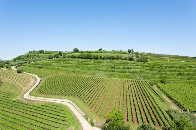 Winnice z soave, słynnego obszaru winiarskiego.