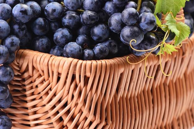 Winogrona, tegoroczne zbiory