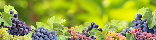 Winogrona z twojego ulubionego ogrodu