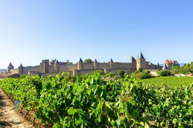 Winogronowe wino w winnicach szampańskich w carcassonne