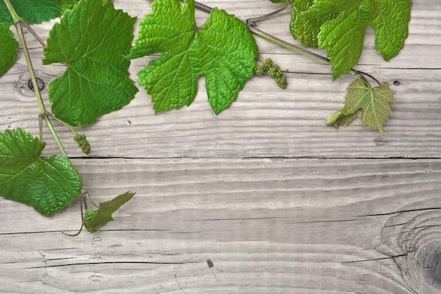 Winorośl na drewniane tła