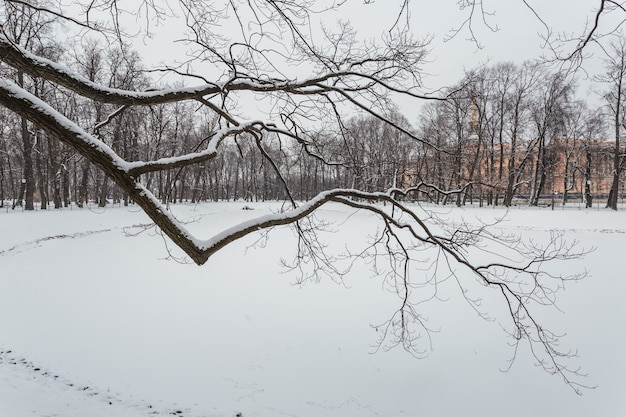 Winter park w sankt petersburgu w rosji.