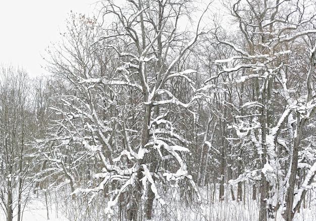 Winter park w śniegu, letni dzień