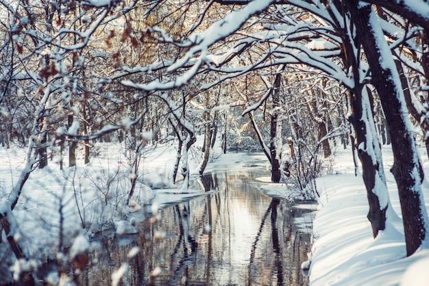 Winter park w śniegu