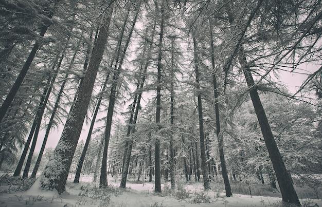 Winter park z drzewami pokrytymi śniegiem