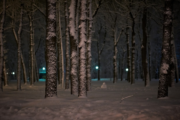 Winter snow night park