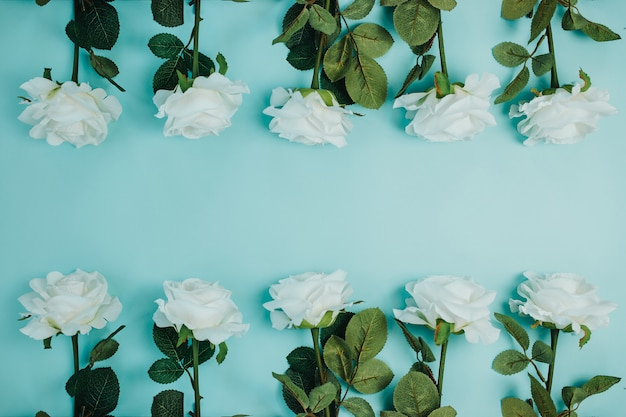 Wiosenna karta świeżości z kwiatami. białe róże z zielonymi liśćmi. piękne białe róże z długą łodygą i miejsca kopiowania.