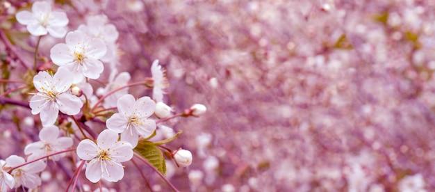 Wiosenna kwitnąca wiśnia. tło dla karty z pozdrowieniami, zaproszenie na ślub i zaangażowanie.