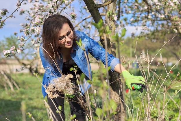 Wiosenna praca w ogrodzie z roślinami. kobieta ogrodnik w rękawiczkach z sekatorem tnie suche gałęzie na krzaku hortensji, wiosna kwitnący słoneczny ogród tło