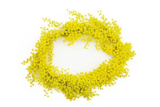Wiosenna ramka kwiatowy kwiatów mimozy. na białym tle na białej powierzchni