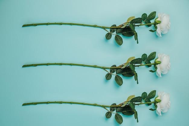Wiosenna świeżość. trzy białe róże z zielonymi liśćmi. piękne białe róże z długą łodygą.