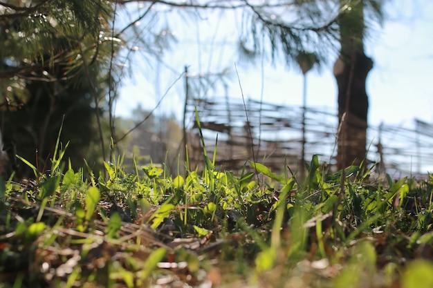 Wiosenna trawa i kwiat