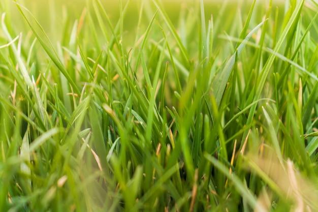 Wiosenna trawa w świetle słonecznym i rozmytym niebie na tle