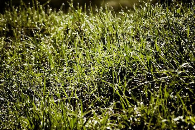 Wiosenna trawa z zbliżeniem rosy z filtrem