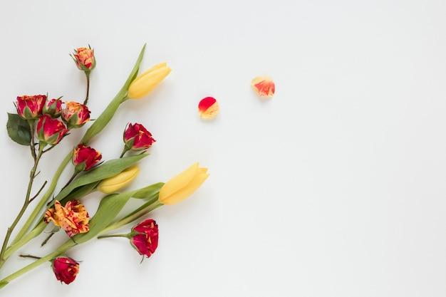 Wiosenne ciepłe kolorowe kwiaty i płatki