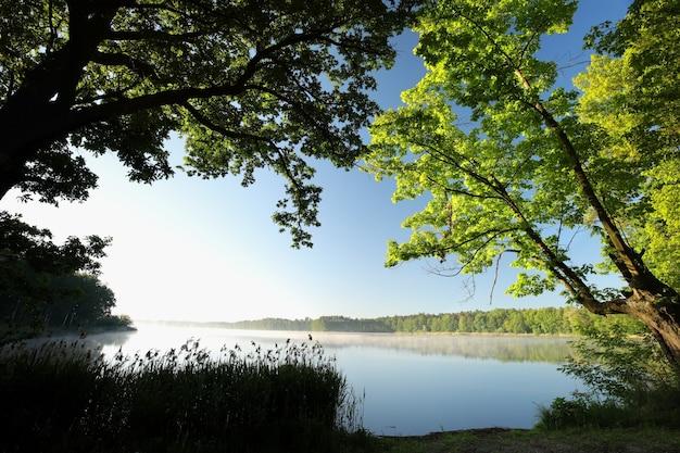 Wiosenne dęby na brzegu jeziora podkreślone przez wschodzące słońce