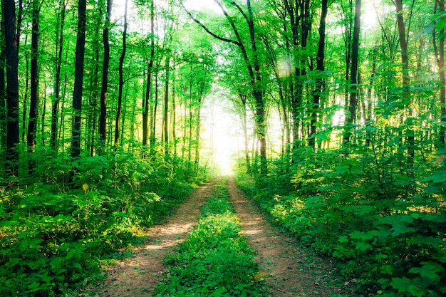 Wiosenne drzewa leśne. natura zielone drewno