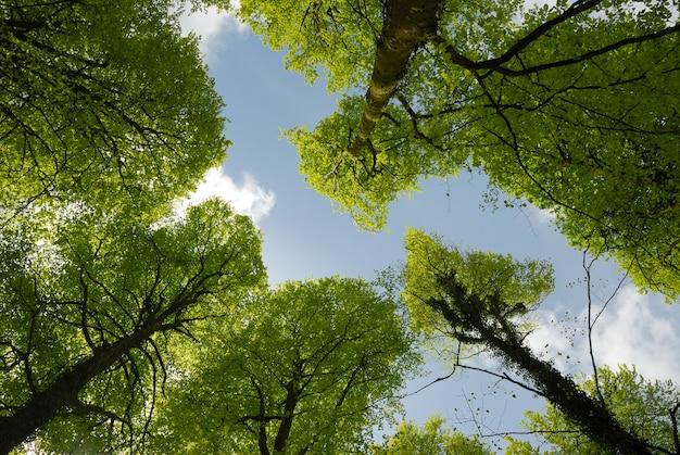 Wiosenne drzewa leśne