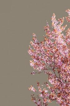 Wiosenne drzewo sakura kwitnące na szarym tle (minimalistyczne zdjęcie pionowe)