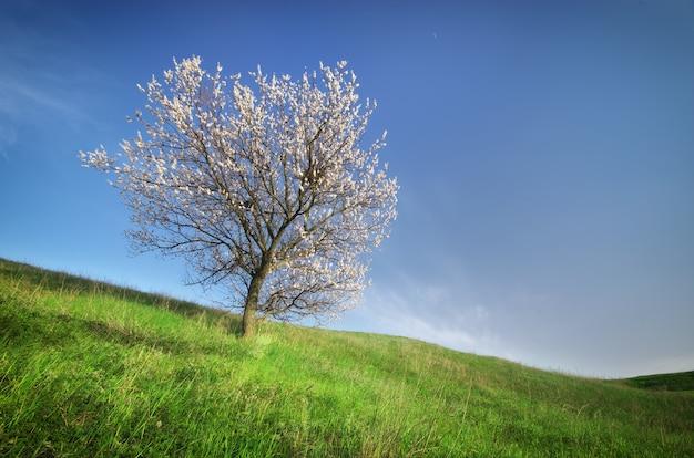 Wiosenne drzewo w zielonej łące. kompozycja natury.